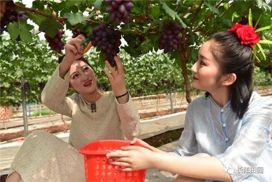 内江有机水果采摘